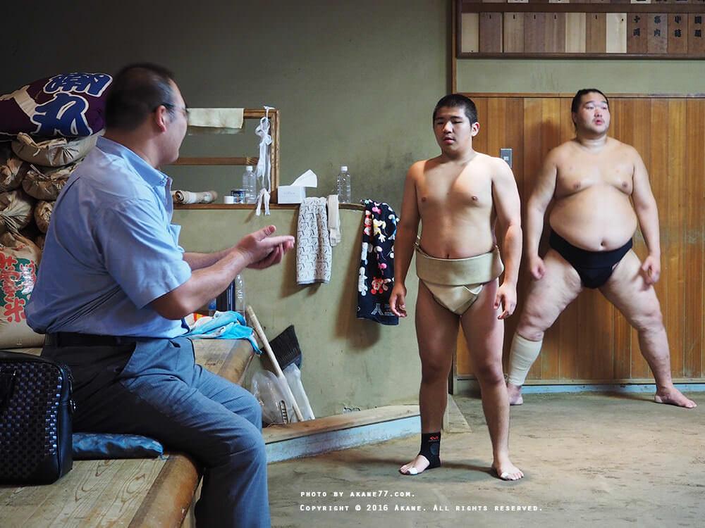 sumo5