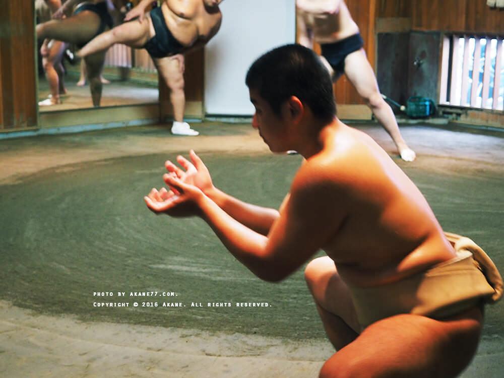 sumo6