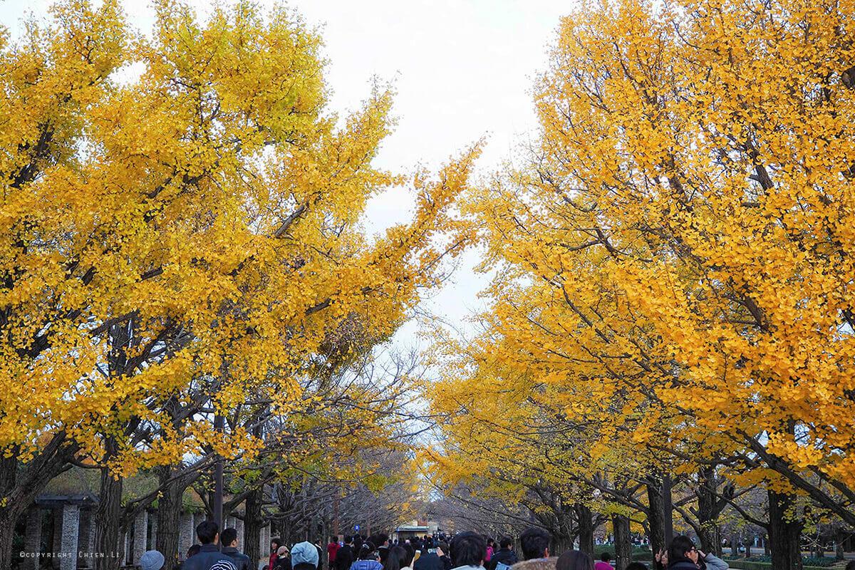 國營昭和紀念公園賞銀杏