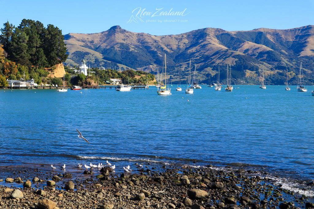 紐西蘭南島景點akaroa景點