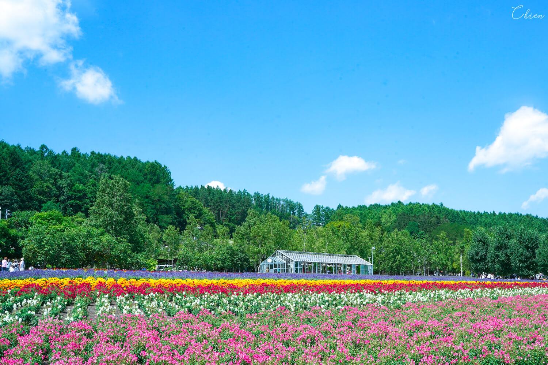 北海道夏天必去景點!富良野薰衣草「富田農場」花田