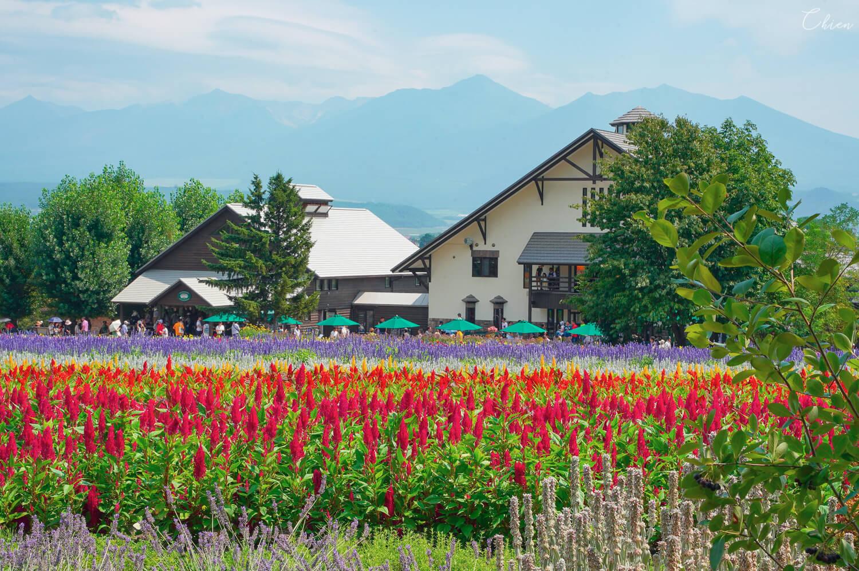 北海道夏天必去景點!富良野「富田農場」花田
