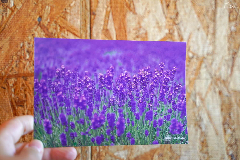 北海道夏天必去景點!富良野「富田農場」薰衣草明信片