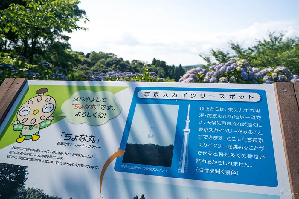 千葉縣賞花景點 野見金公園繡球花花海絕景!