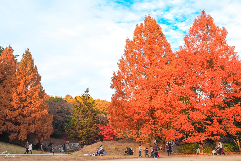 國營昭和紀念公園 秋天景點