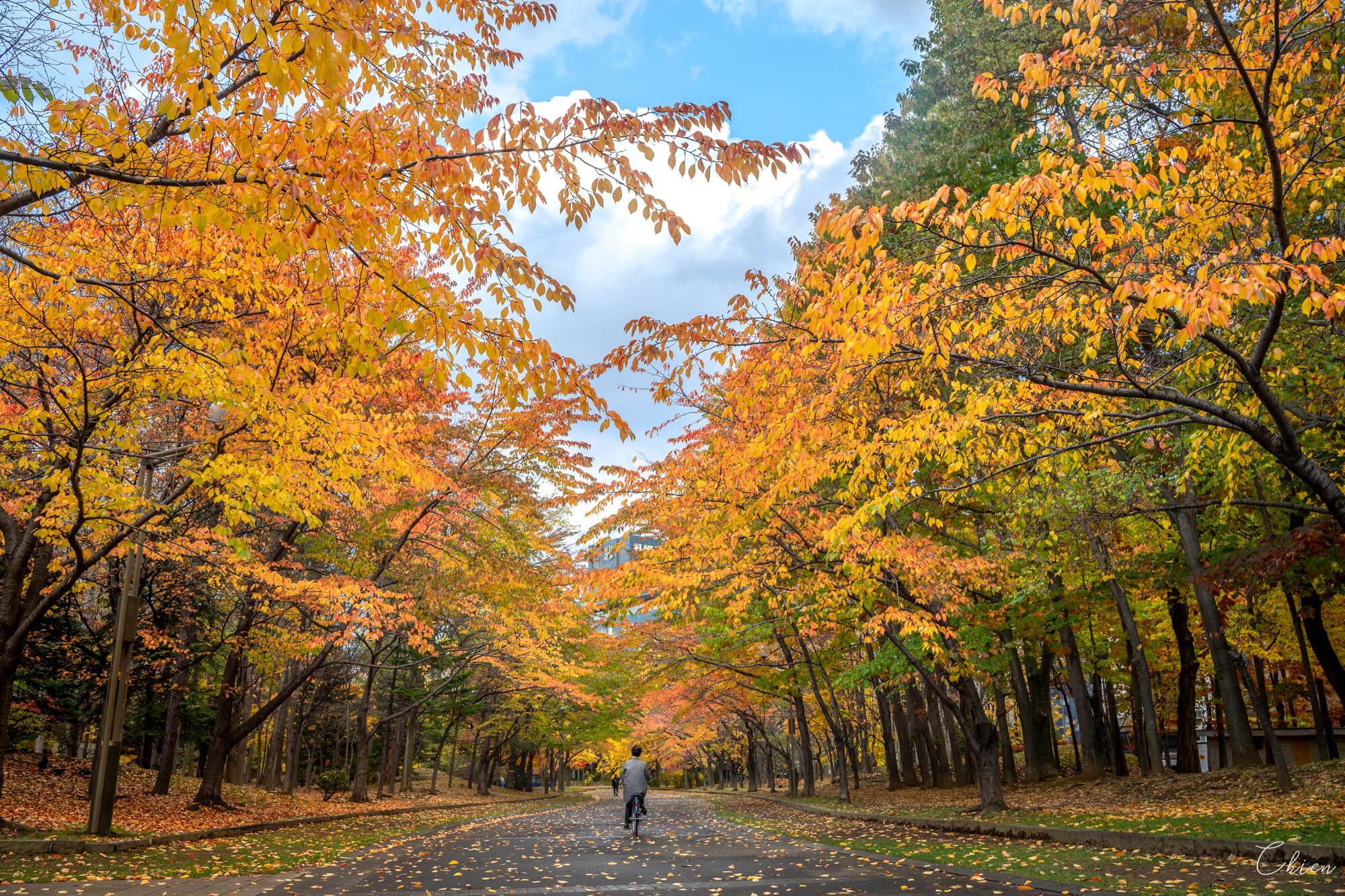 北海道 中島公園賞楓賞銀杏 賞櫻花