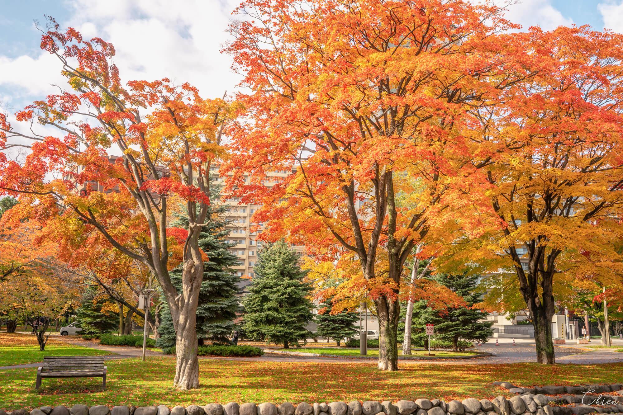北海道札幌中島公園 楓葉