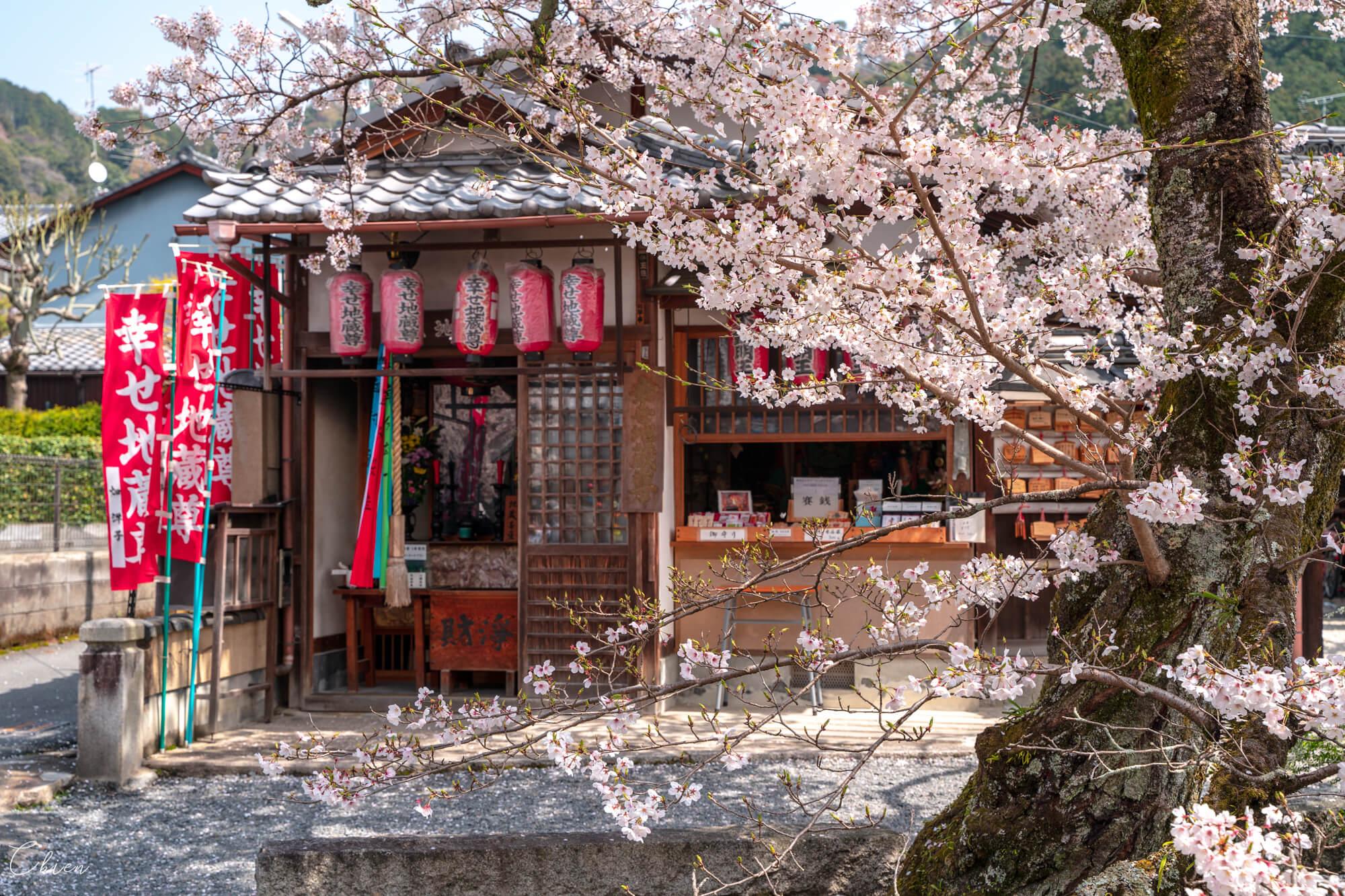 京都賞櫻景點 哲學之道櫻花神社