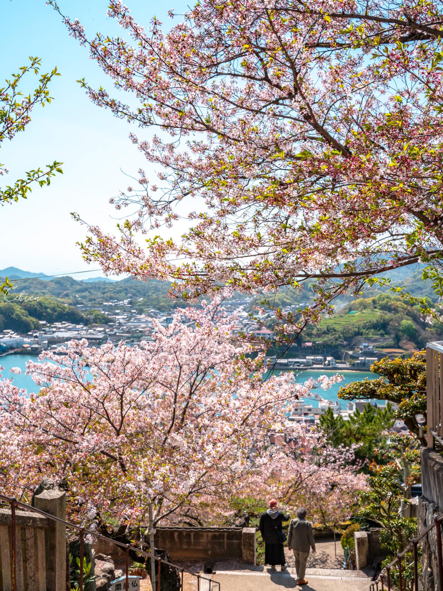廣島尾道景點散策 櫻花公園2