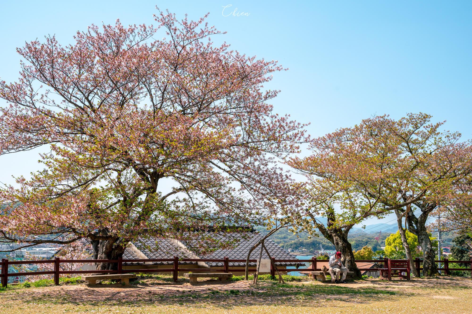 廣島尾道景點散策 賞櫻櫻花公園