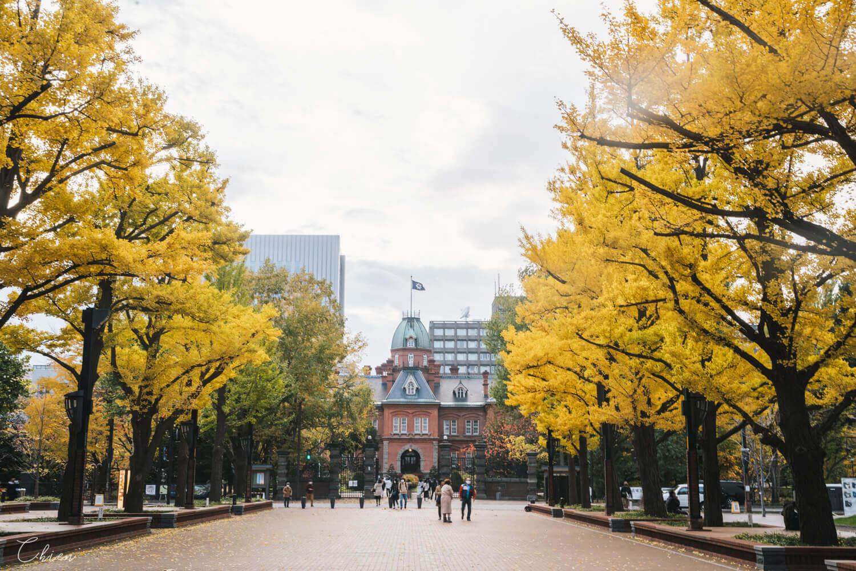 北海道札幌「銀杏景點」推薦 北海道廳舊本廳舍